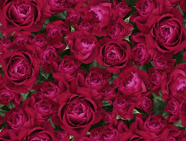 Gypsy Rose Print