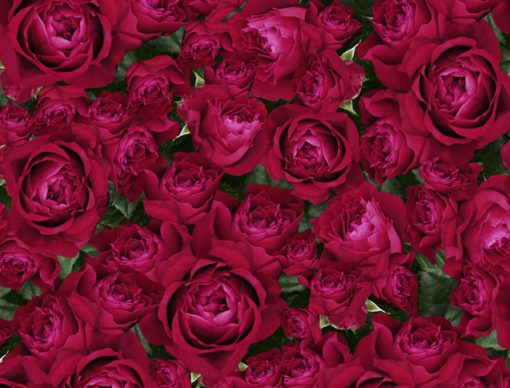 gypsy_rose